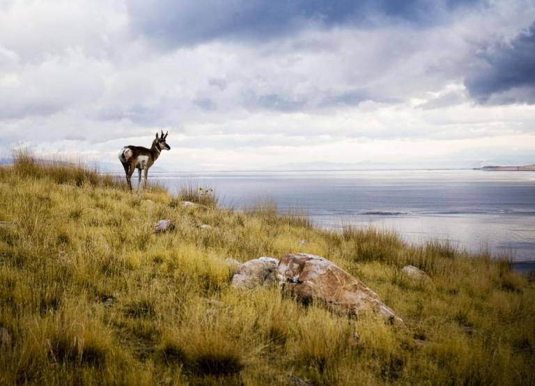 Urban Living Salt Lake City a Short Drive From Antelope Island