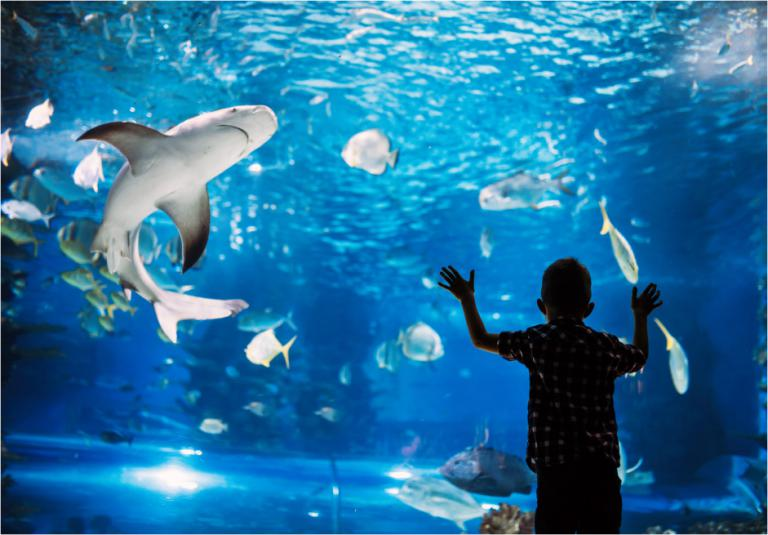Experience Downtown Salt Lake and the Loveland Aquarium